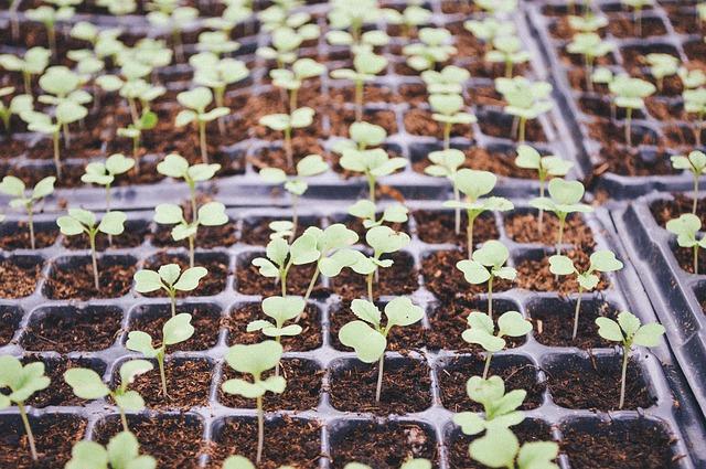 Ph gleby – zakwaszenie gleby