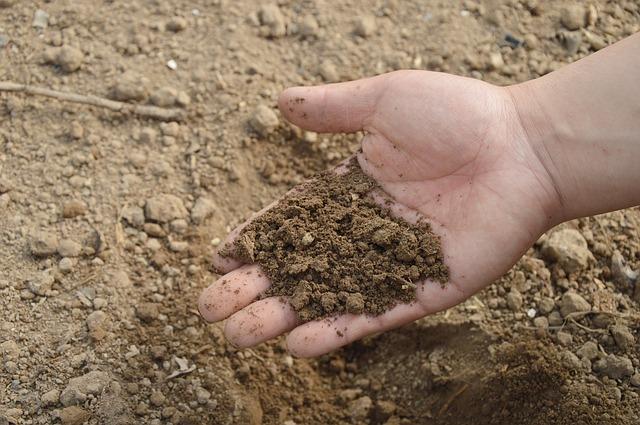Skuteczny nawóz organiczny, biohumus w ogrodzie