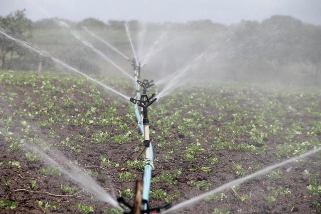 automatyczne nawadnianie ogrodów Szczecin – kwiaty w Szczecinie