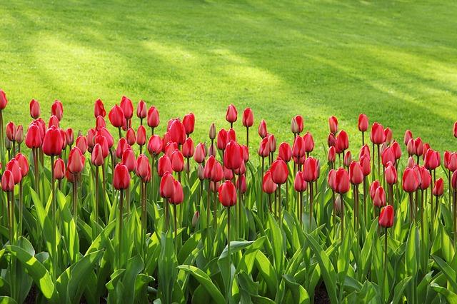Ogród ozdobny