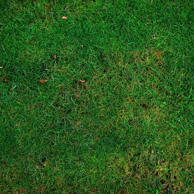 Nawożenie w ogrodzie –kompostowanie w ogrodzie