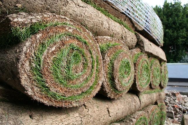 Trawy do ogrodu – trawnik w rolce
