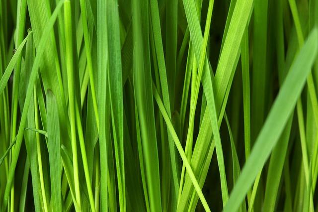 Przygotowanie powierzchni pod trawniki