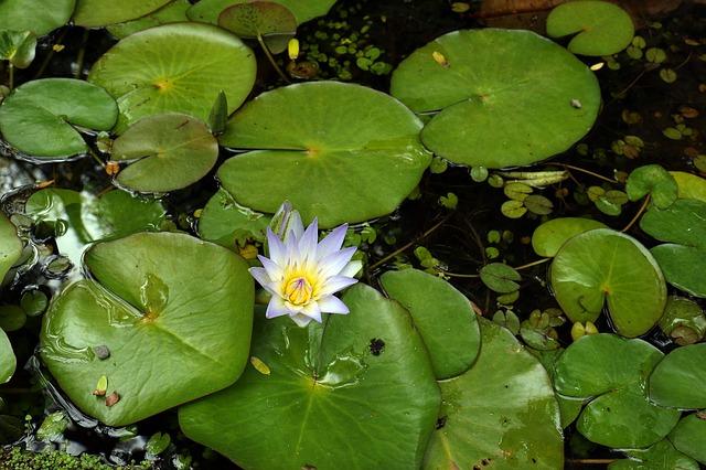 Ogrodowe oczka wodne – oczko wodne z kamienia, filtry do oczek wodnych