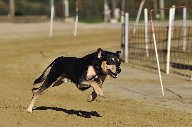 Co zrobić, gdy twój pies zaginie?
