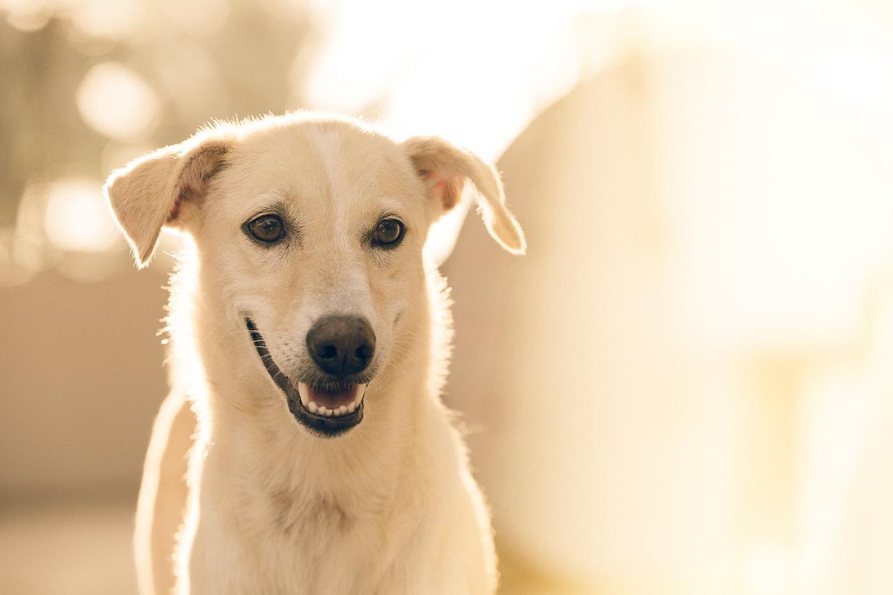 Jak wyleczyć psa ze świerzba?