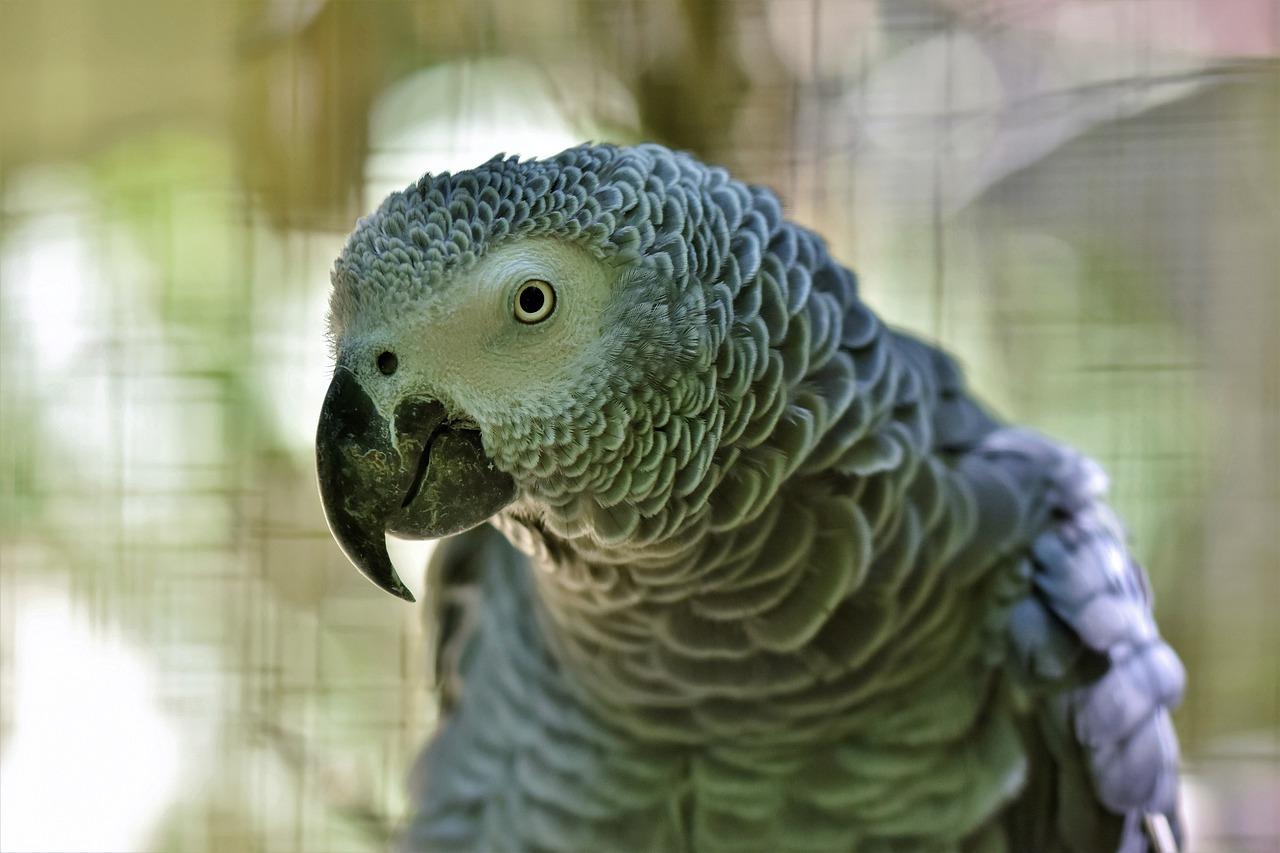 Z jakim wydatkiem trzeba się liczyć przy zakupie papugi?